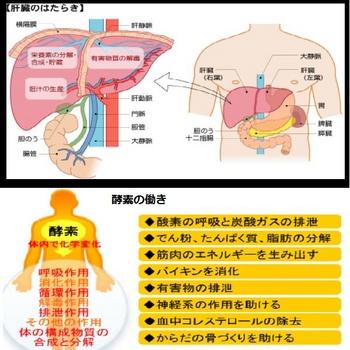 合成肝臓.jpg