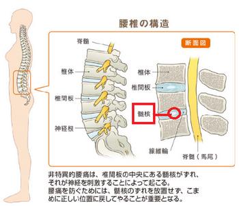腰椎の構造.png